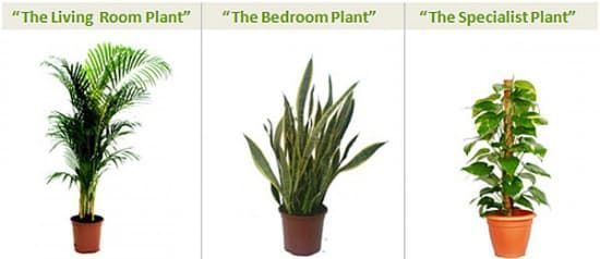 Hot Tip: The Best Plants for Indoor Air Quality