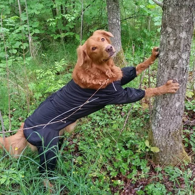 Best 25+ Weird dogs ideas on Pinterest | Cats doing funny ...