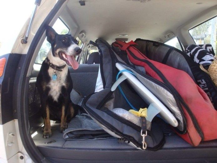 Dog friendly camping and wineries in Margaret River