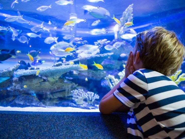 What You Need To Know About The Gatlinburg Aquarium Before You Visit