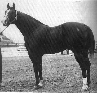 Lightning Bar, why Doc Bar bred horses can run!