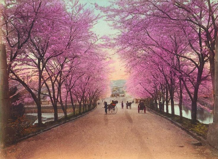 Tree Blossoms - Yahoo Image Search Results