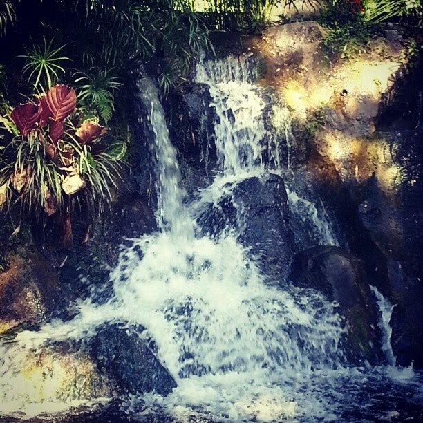 botanik garden, Guadeloupe