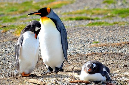 Learn all you wanted to know about emperor penguins with pictures, videos, photos, facts, and news from National Geographic.