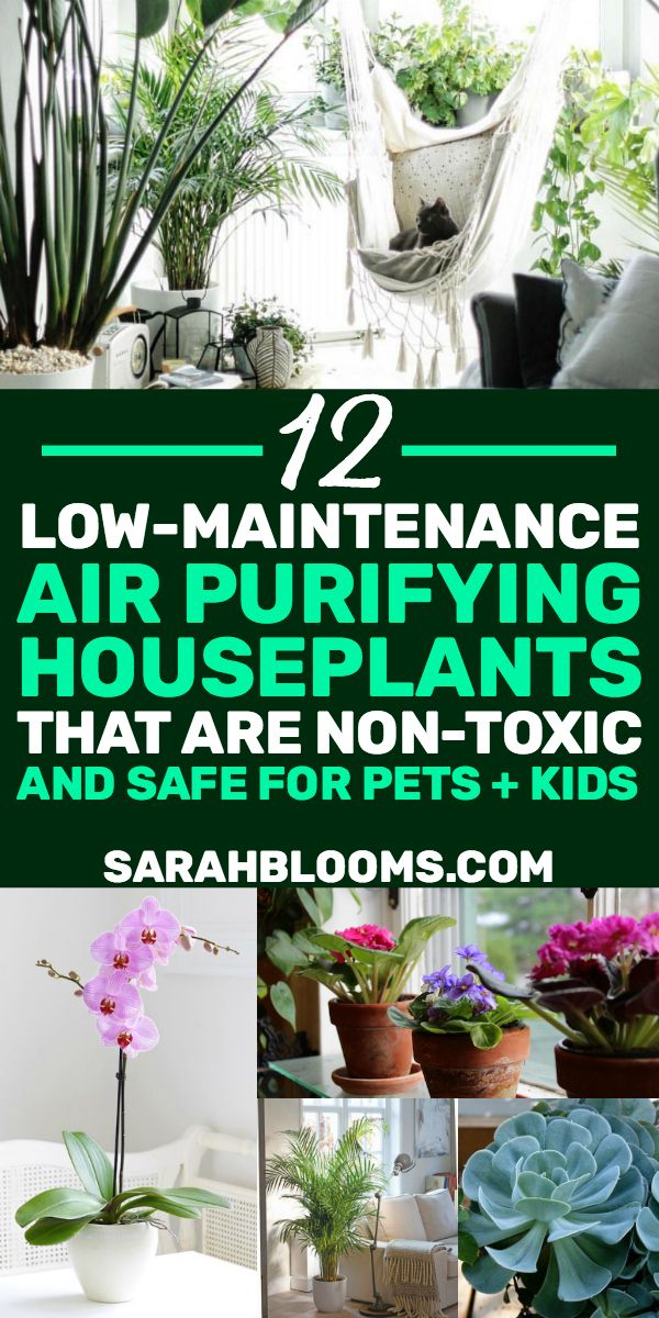 12 Air Purifying Houseplants Safe For Dogs Cats Air Purifying Plants Plants Indoor Plants