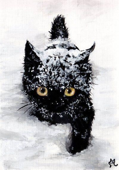 Black cat snow
