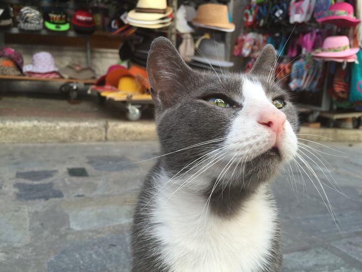 Leros Aristo-Cat