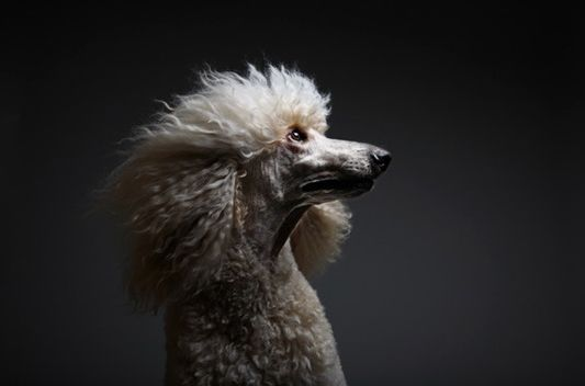Stunning.Pets Portraits, Furtograph Pets, Photography Lights, Boxes Black, Animal Photography, Animal Portraits, Pets Photography, Photography Inspiration, Photography Ideas