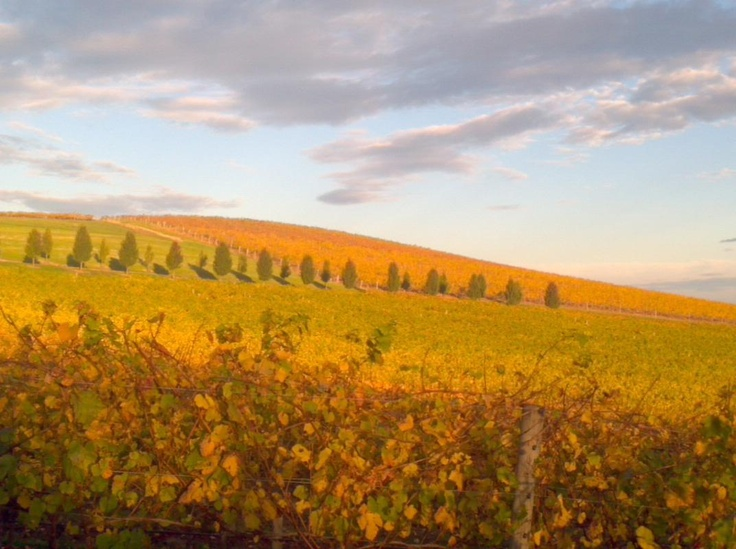 This is what we love about living in the Yarra Valley. So beautiful in Autumn