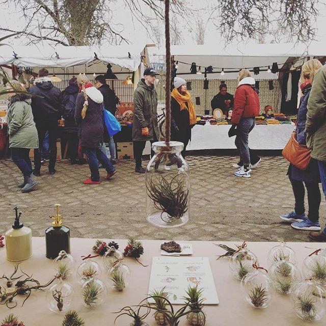 Luftpflanzen Berlin wieder auf dem mauerpark flohmarkt! komm vorbei! #flohmarkt