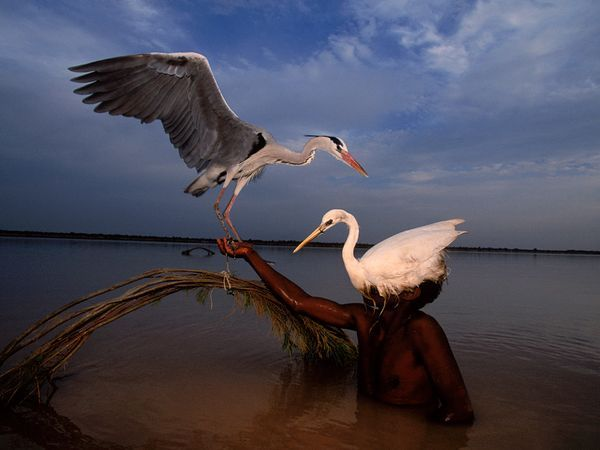 A bird hunter sports a heron decoy in the Indus River. The ancient Indus civilization, which reached its height some 3,000 years ago, commanded an area the size of Texas that reached from the Arabian Sea to the Himalayan foothills.