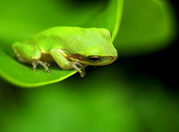 another cute frog...can't resist 'em!