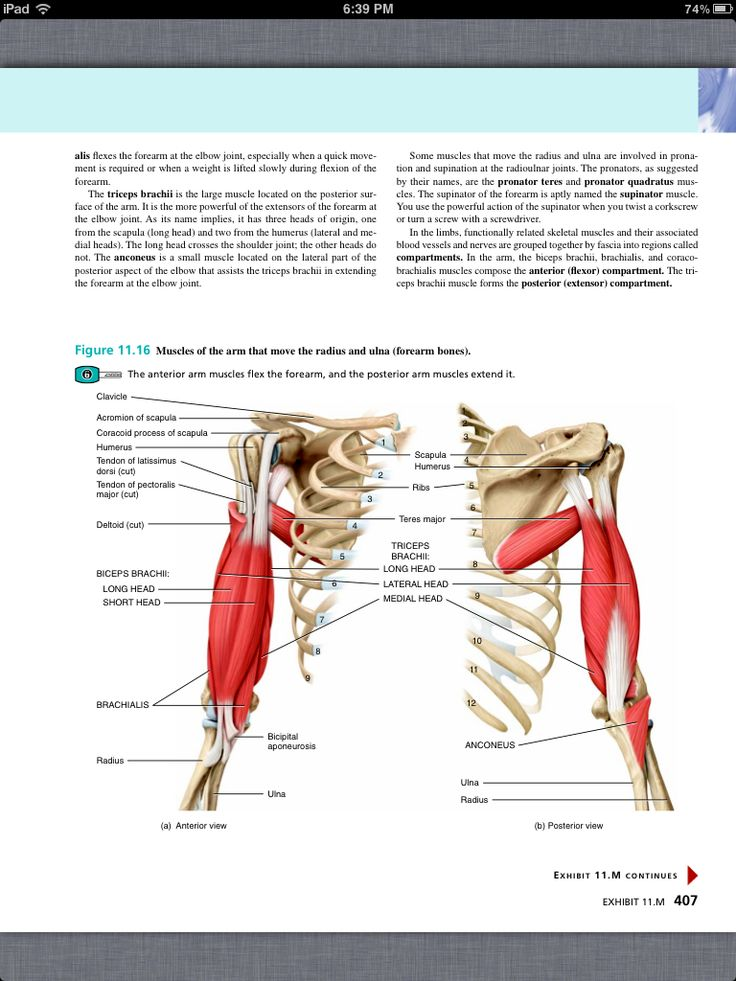 82 best Chapter 11, The Muscular System images on Pinterest | Book ...