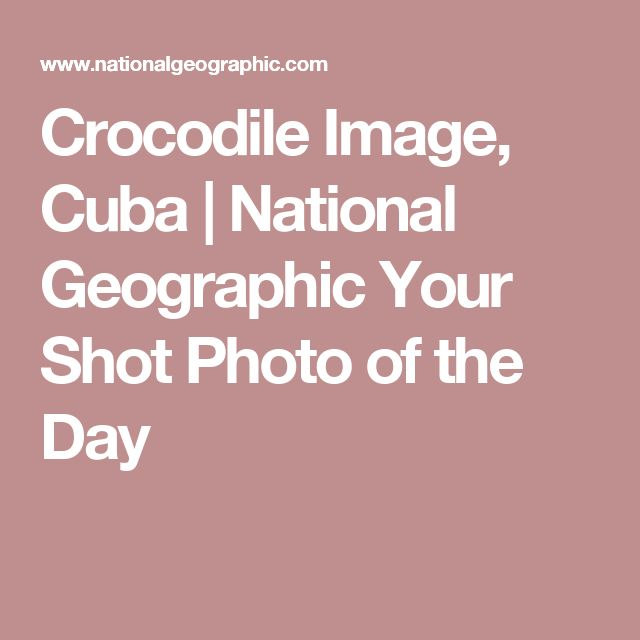 Crocodile Image, Cuba |National Geographic Your Shot Photo of the Day