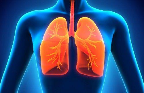 Lungen