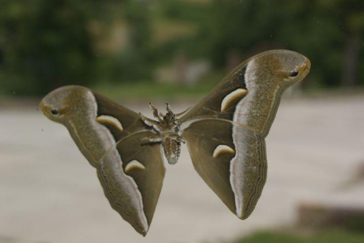 Farfalle a Bonvino