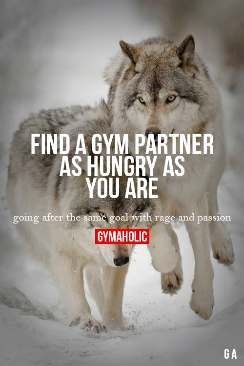 Find A Gym Partner As Hungry As You Are Fitness Revolution -> http://www.gymaholic.co/ #fit #fitness #fitblr #fitspo #motivation #gym #gymaholic #workouts #nutrition #supplements #muscles #healthy