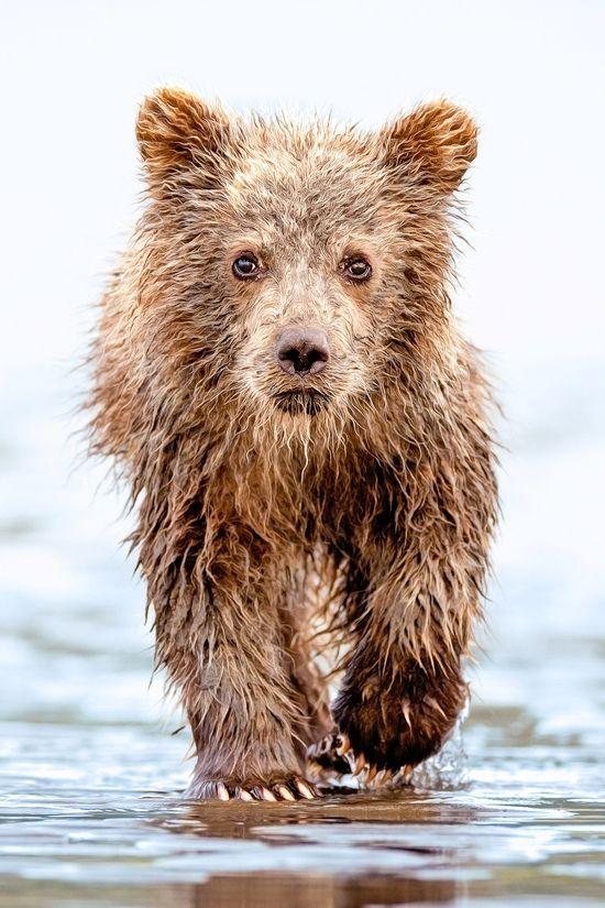 Bear cub - Lisa Aikenhead.