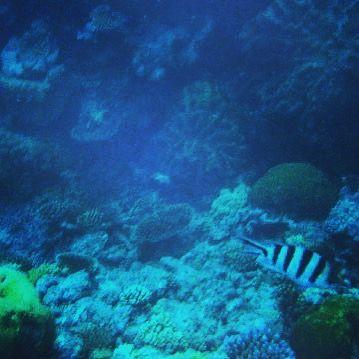 2015. 12. 31  죽기 전 꼭 가봐야할 곳 2위 ' Great Barrier Reef '  에서 스노쿨링 과 스쿠버다이빙은 감동  #australia #cairns #great #barrier #reef #greatbarrierreef #snorkeling #scubadiving #underthesea #deep #blue #sea #coral #fish #trip #travel #travelgram #호주 #여행 #케언즈 #그레이트배리어리프 #산호초 #바다 #스노쿨링 #스쿠버다이빙 #물고기 #여행 by dear___b http://ift.tt/1UokkV2