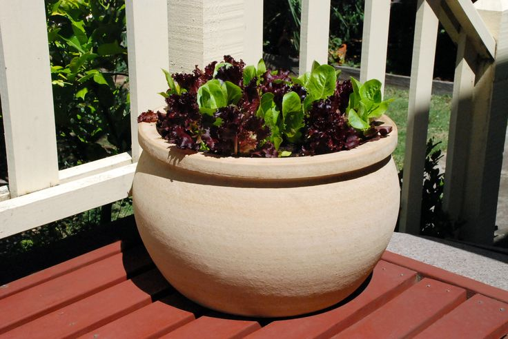 Northcote Pottery 26cm Sand caféSTYLE Terracotta Bavaria Bowl Pot #vegetablegarden #outdoorliving #neutral