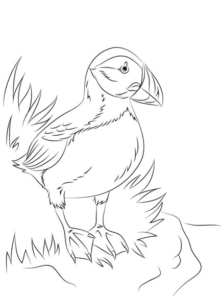 Atlantic Puffin Seabird Coloring page (North Pole)