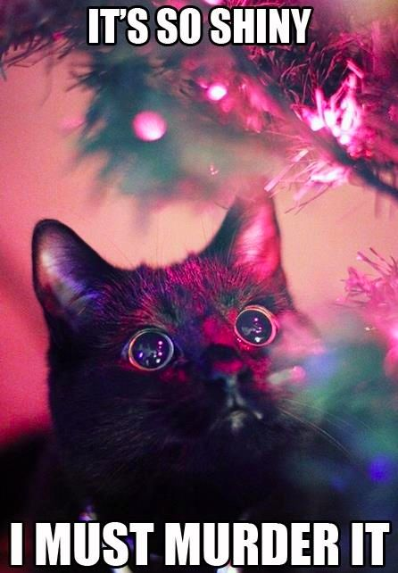 Kittehs and Christmas