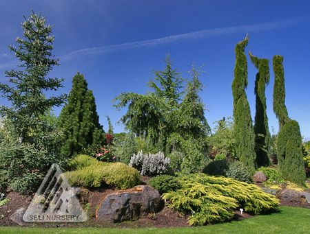 Conifer Garden Ideas long island conifer garden Favorite Conifer