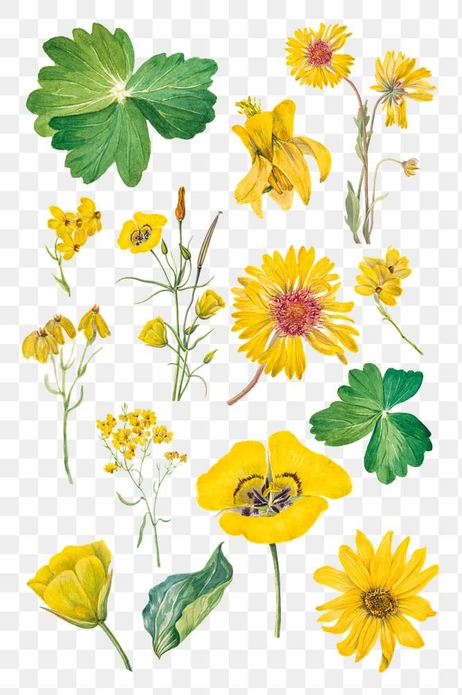 Hand Drawn Yellow Flower Png Set Watercolor Sticker Free Image By Rawpixel Com Hein Flower Png Images Flower Illustration Flower Drawing