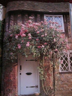 This is what I'd like my front door to look like only with a wisteria instead.