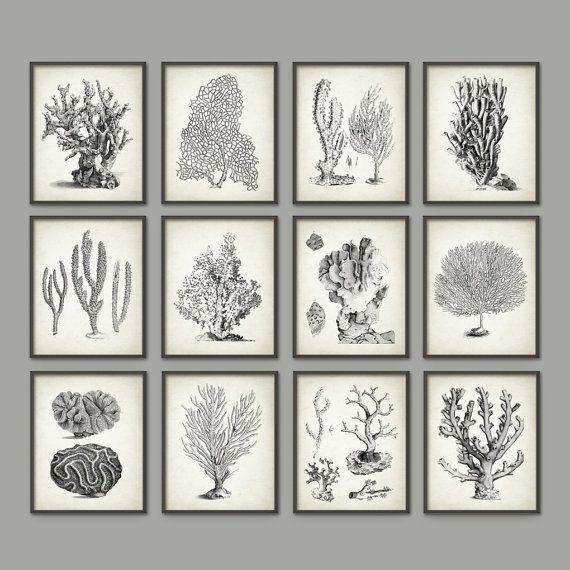 vintage coral wall art set of 12 marine wall art posters coral nautical print marine biology wall art ab410