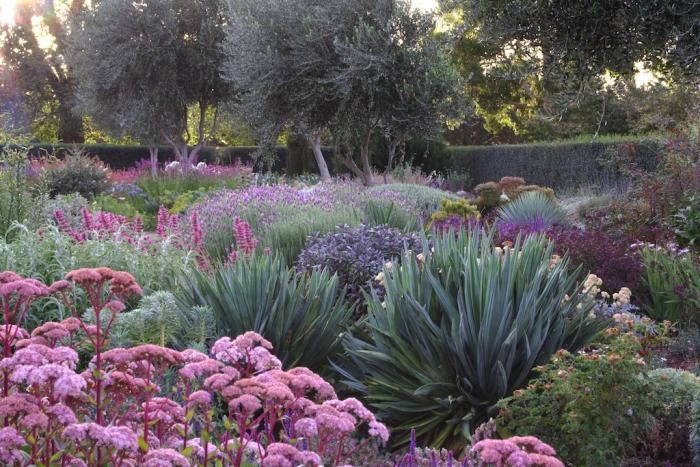 A garden you water four times a year (via Gardenista).