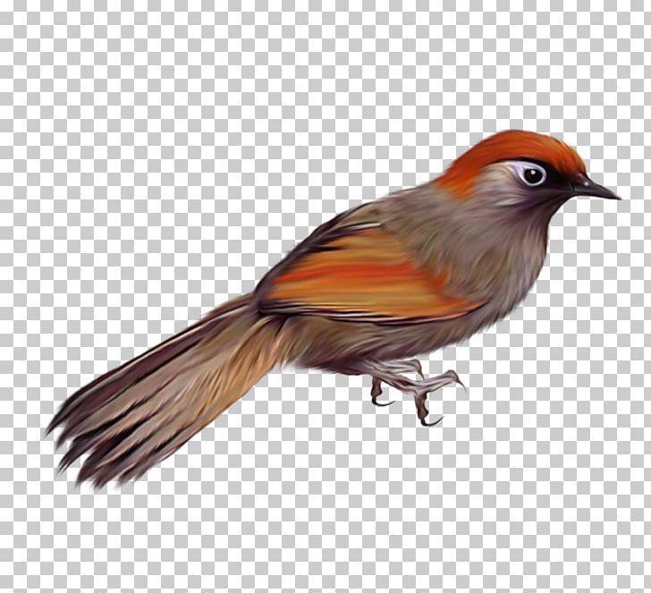 Birds Png Birds Robin Bird Birds Png