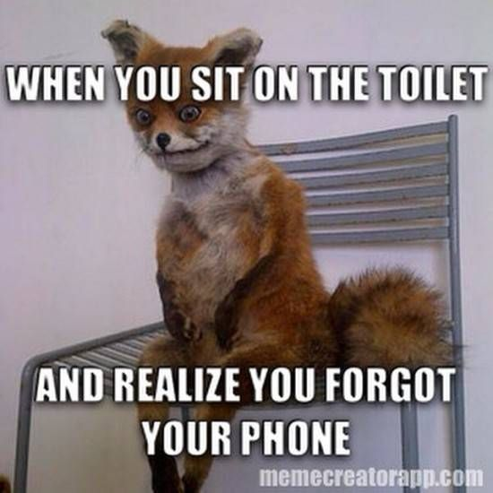 43 best images about fox on pinterest bad taxidermy the