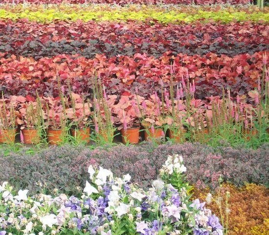 vente en ligne plantes vivaces graminées decoration jardin - lesjardinsdegrenelle