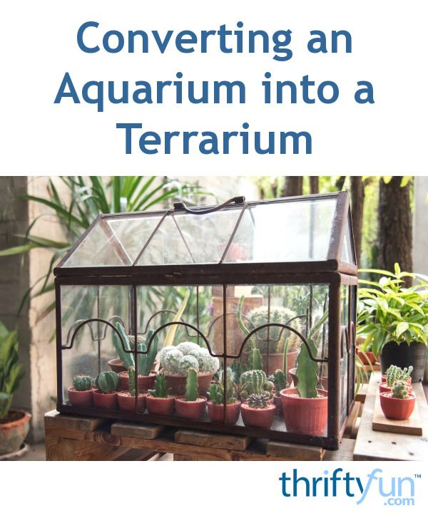 This guide is about converting an aquarium into a terrarium. When your fish tank is worn out or you do not need it anymore, recycle it into a controlled environment for plants or reptiles.