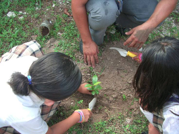 Planting seedlings at local school with the students - a super fun activity for the whole family