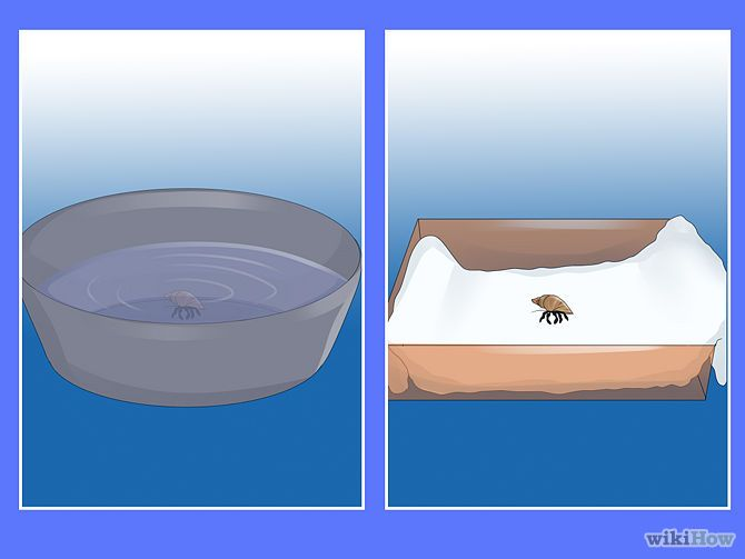 Give Your Hermit Crab a Bath Step 3.jpg