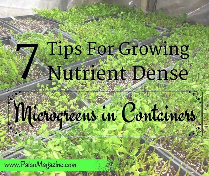 Read about7 Tips For Growing Nutrient Dense Microgreen Containers here.