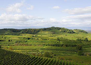 Kaesleberg in Kaiserstuhl, Baden, Germany. Great Pinot Noir from SALWEY.