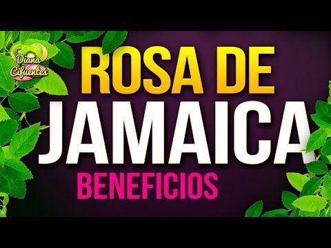 Para Que Sirve La Jamaica - Propiedades, Beneficios Y Contraindicaciones De La Rosa De Jamaica - YouTube