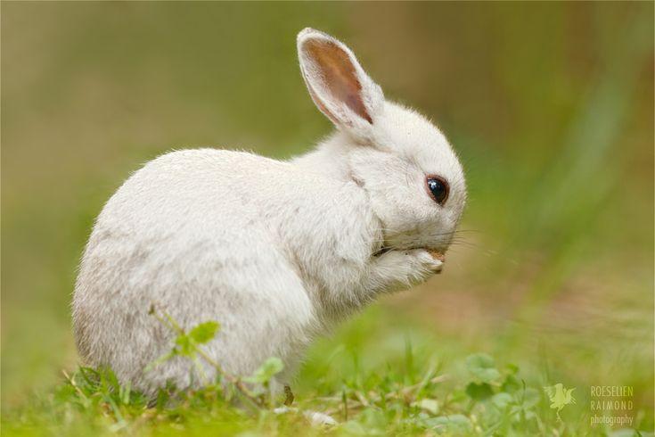 Praying White Rabbit by thrumyeye on DeviantArt