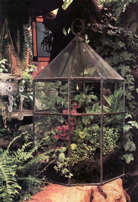 outside in: Interior Design, Container Gardens, Terrarium Indoor Gardening, Garden House Plants, Gardening Ideas, Closed Container, Container Terrariums, Container Gardening