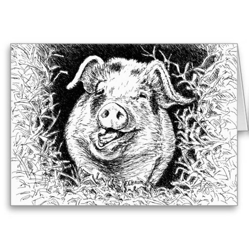 happy hog animal drawing greeting cards