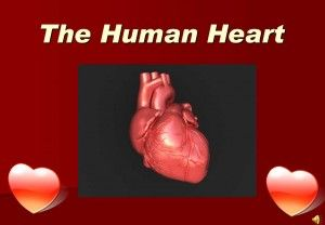 PowerPoint presentation on how the human heart works