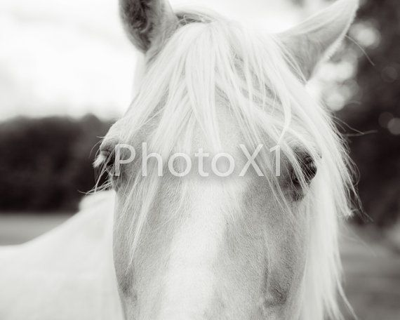 Eyes are soul of a horse 8x10 print by PhotoX1 on Etsy