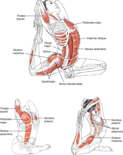 Yoga Inspiration - B E N E F I T S — Stimulate the internal organs; — Stretch deep glutes; — Stretch groins and psoas (a long muscle on the side of your vertebral column and pelvis); — Relieve impinged piriformis and alleviate sciatic pain; — Help with urinary disorders; - Offer emotional release.