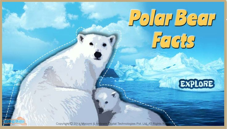 #PolarBearFacts - Know all about these endangered species, Where do #polarbears live?, what do polar bears eat and how much these arctic animals weight? For more interacting #Generalknowledge For #Kids, visit: http://mocomi.com/learn/general-knowledge/
