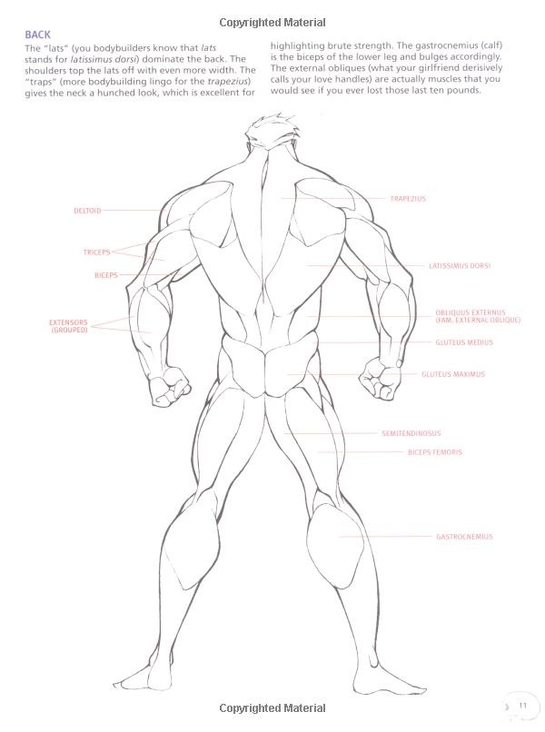 Drawing Cutting Edge Anatomy: The Ultimate Reference for