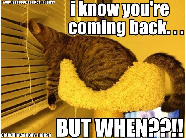 What your cat does while you're out! LOL