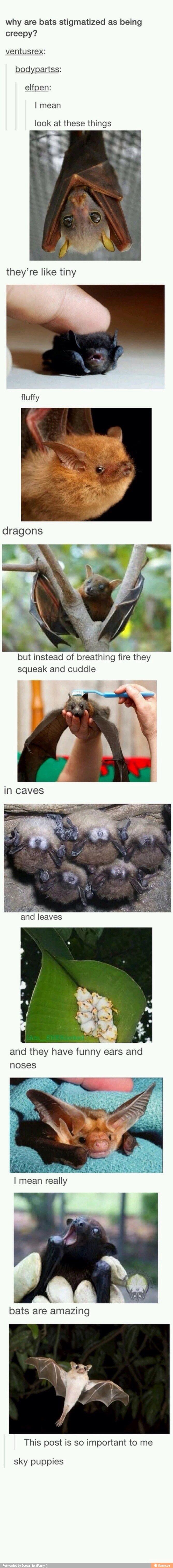 Morcegos não são assustadores ou feios, eles são bonitinhos. Incríveis mamíferos alados.